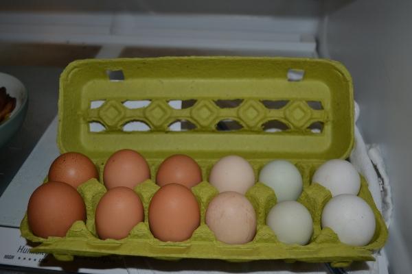pasturized-eggs